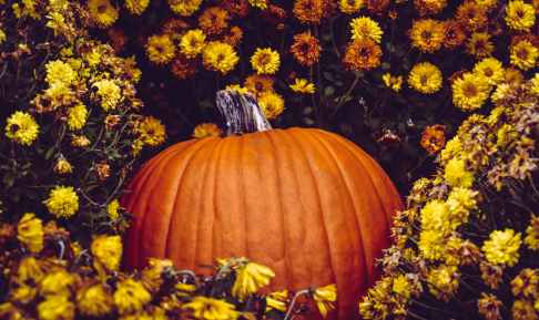 photo of pumpkin surrounded by flowers